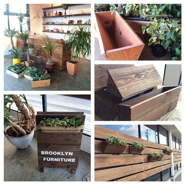 この度、BROOKLYN FURNITUREのグリーンは #棘屋 さんにプロデュースしていただくことになりました。様々な種類の植物に囲まれて、店内もますますかっこ良くなっています。