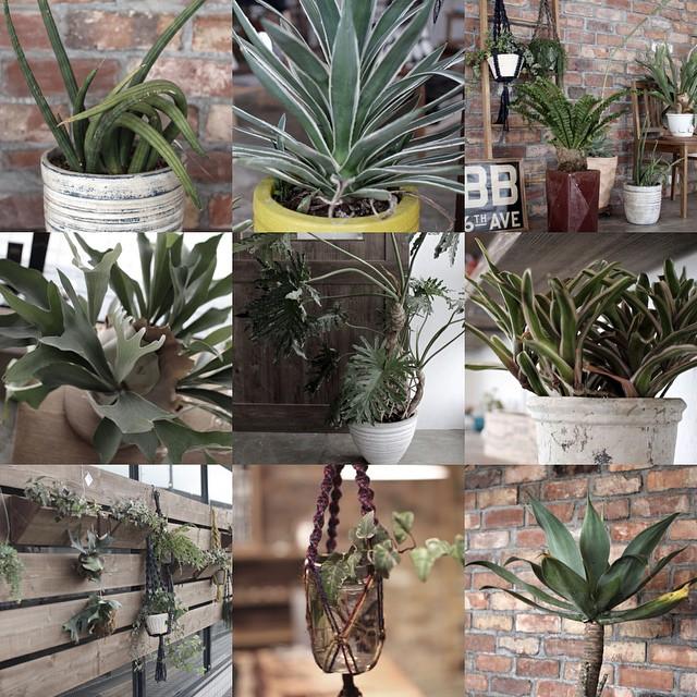 滋賀,植物