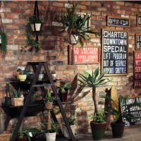 植物、サボテン、棚