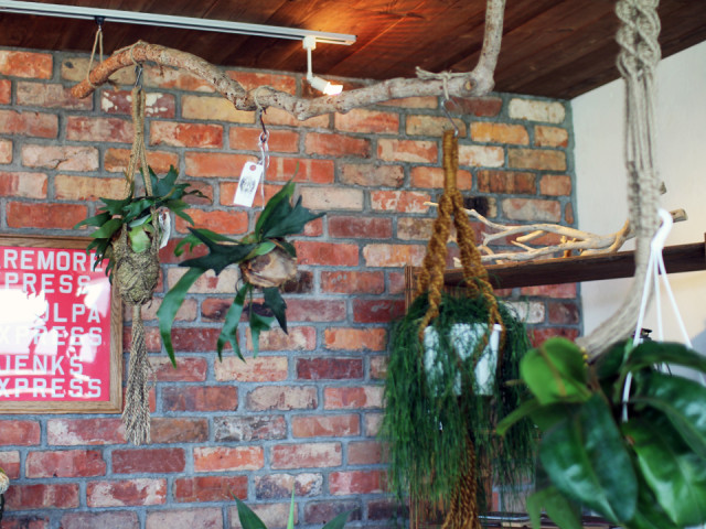 観葉植物、レンガ、足場板、サボテン